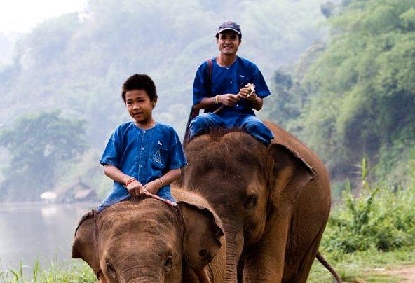 Café recogido de excrementos de elefante